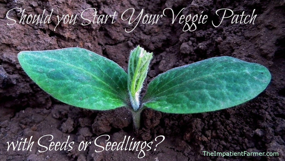 Starting a Veggie Garden