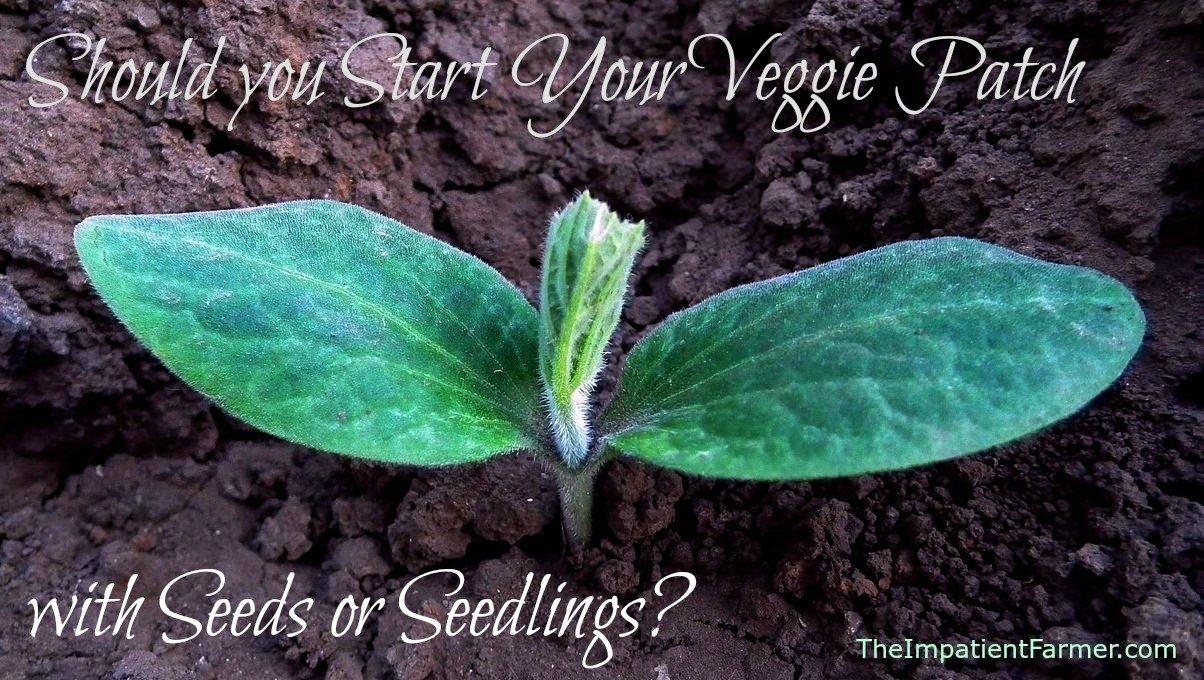 Starting a Veggie Garden