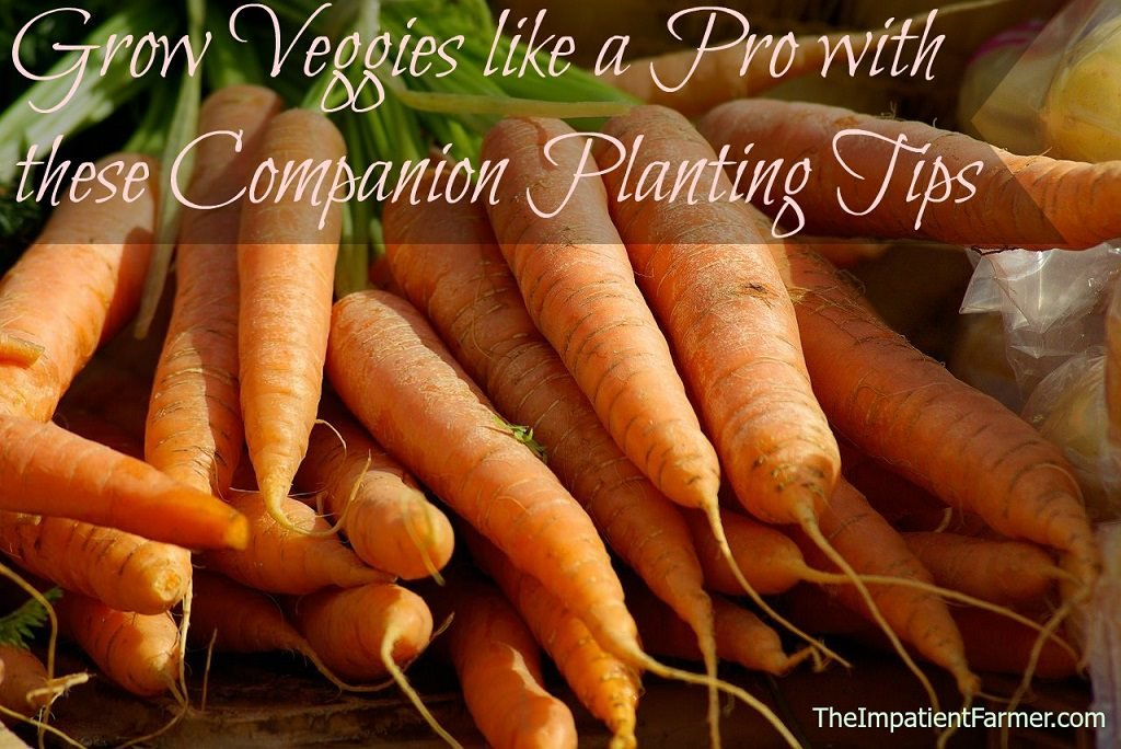 Vegetable Companion Planting Guide