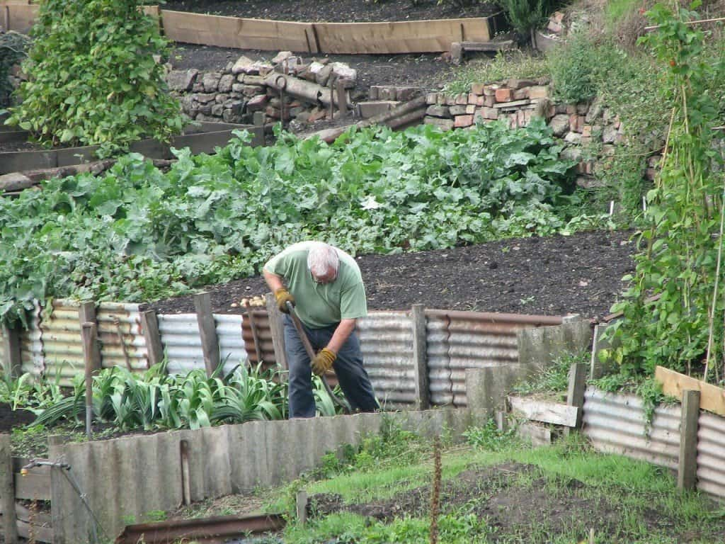 maintaining a large vegetable garden