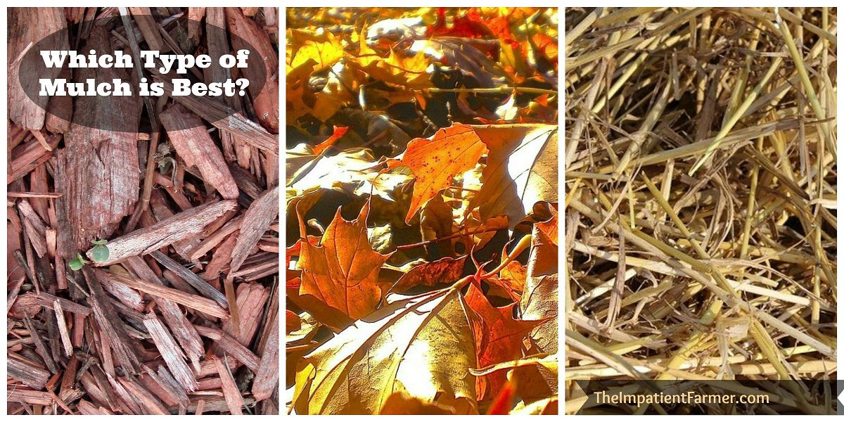 Not sure which mulch to use in your garden? Find out which is the best mulch to use for edible gardens, flowers and pathways.