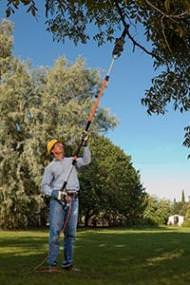 Measure the reach when looking for pole saws