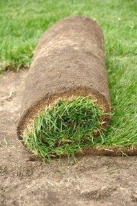 Starting a new lawn with sod
