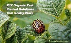 Learn how to keep the bad bugs out & the good bugs in with these organic pest control solutions.