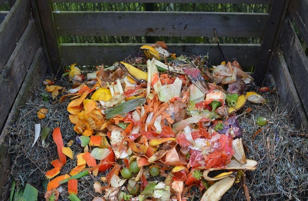 """The """"Green"""" part of compost is made up from vegetable scraps,"""