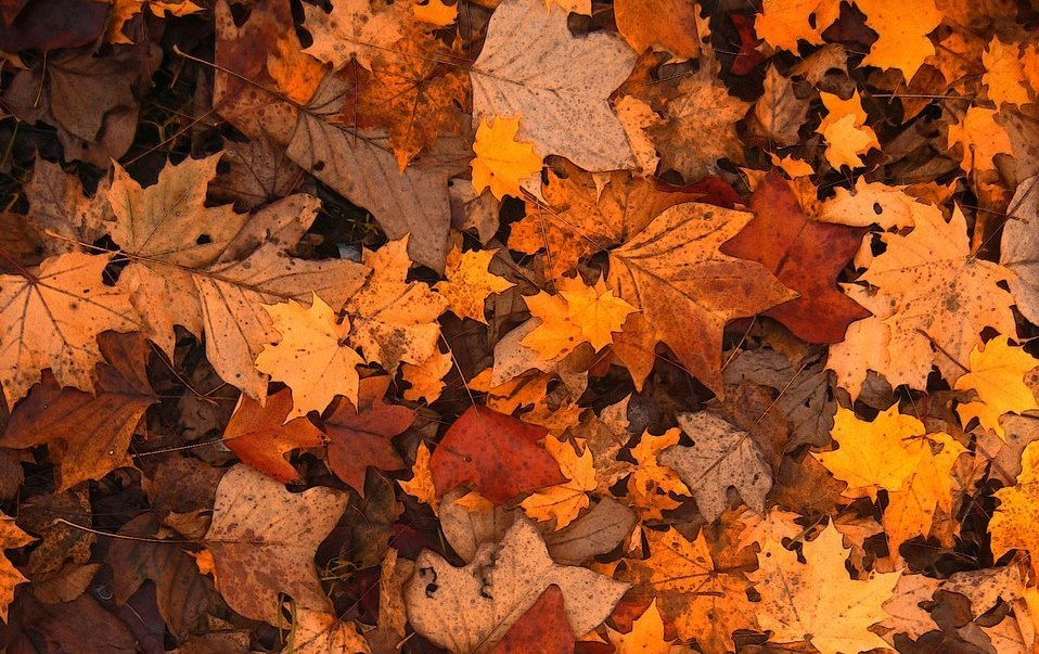The Brown Part of Compost is made up of Leaves, Dried Grass, Straw, Newspaper or Cardboard.