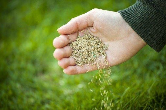 Hand seeding a lawn