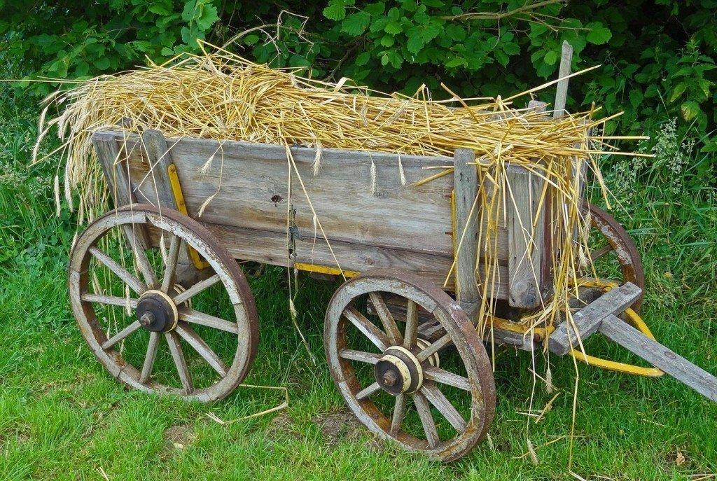 Using straw mulch in the garden