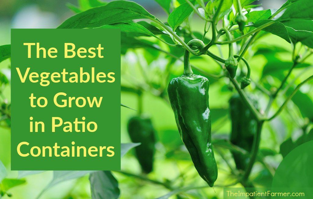Peppers with title the best vegetables to grow in patio containers