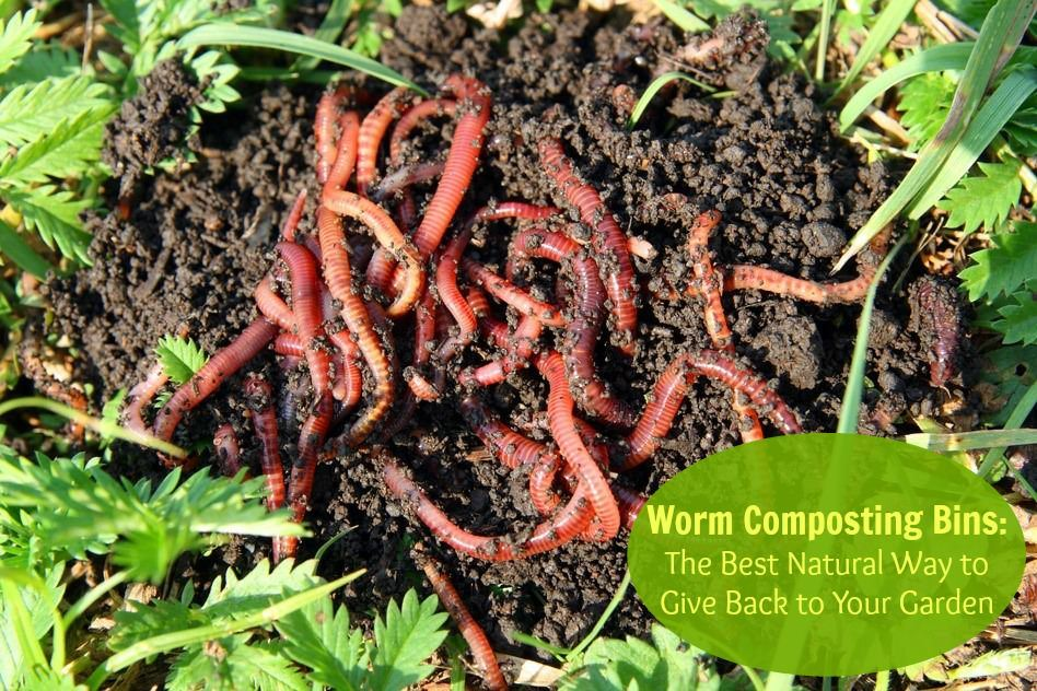 Your guide to setting up a worm composting system. How to setup a warm farm, choose the best worms plus our choice for the best worm composter bin.
