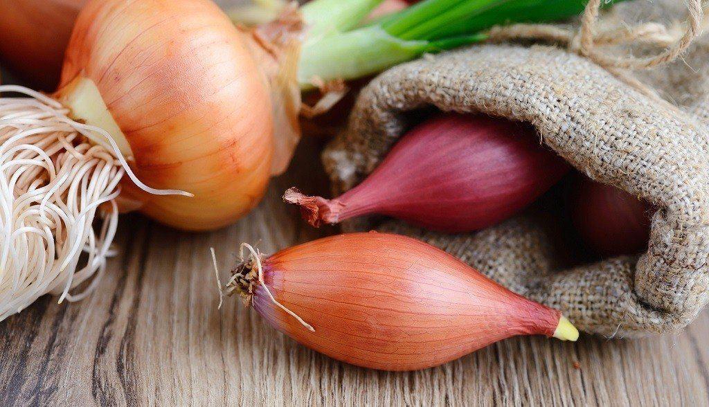 onion bulbs on a planting table