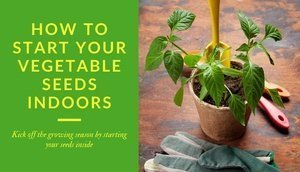 How to start your vegetable seeds indoors - Kick off the growing season by starting your seeds inside