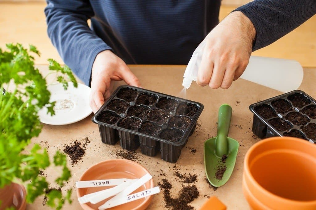 watering seeds after sowing in plastic pots