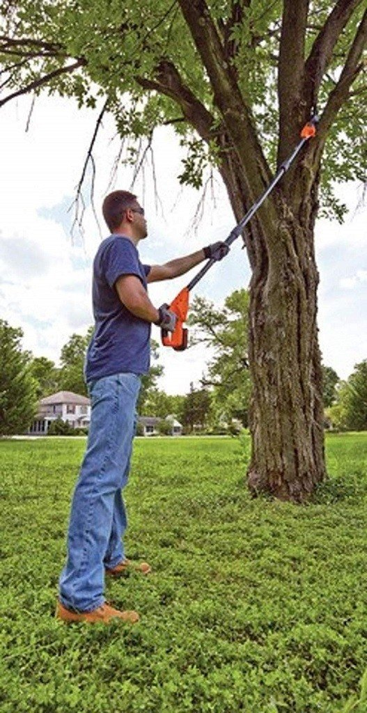 Man trimming a high tree branch