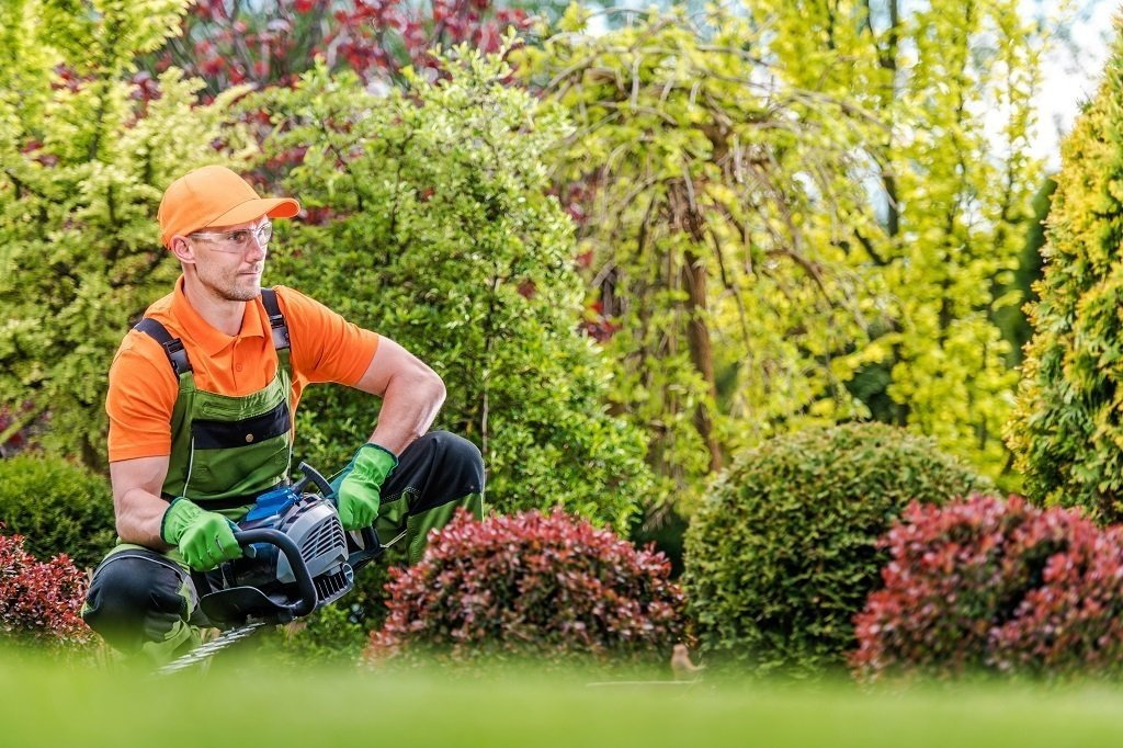 man looking at his yard getting ready to trim the hedges
