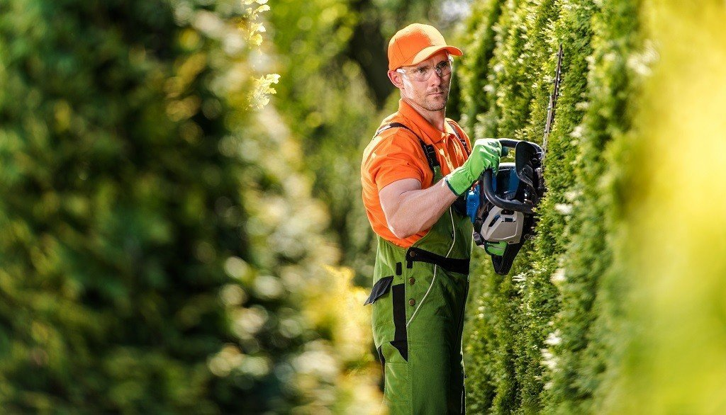 man trimming the side of a row of hedges