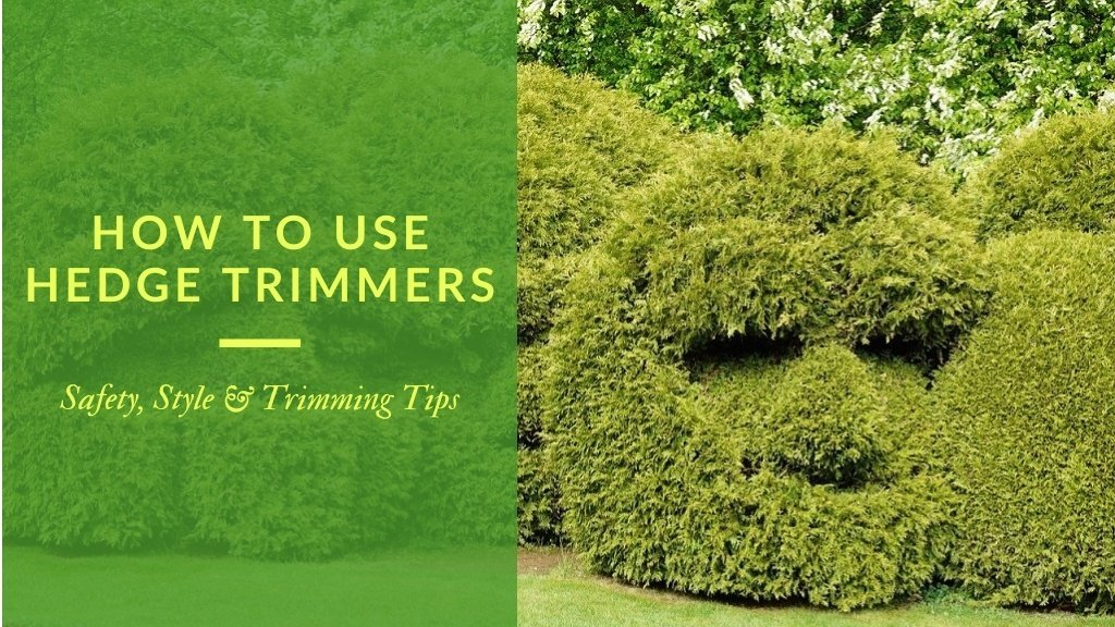 Title - how to use hedge trimmers - safety, style and trimming tips;  shown with boxwood shaped to resemble a person