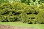 boxwood trimmed to resemble people