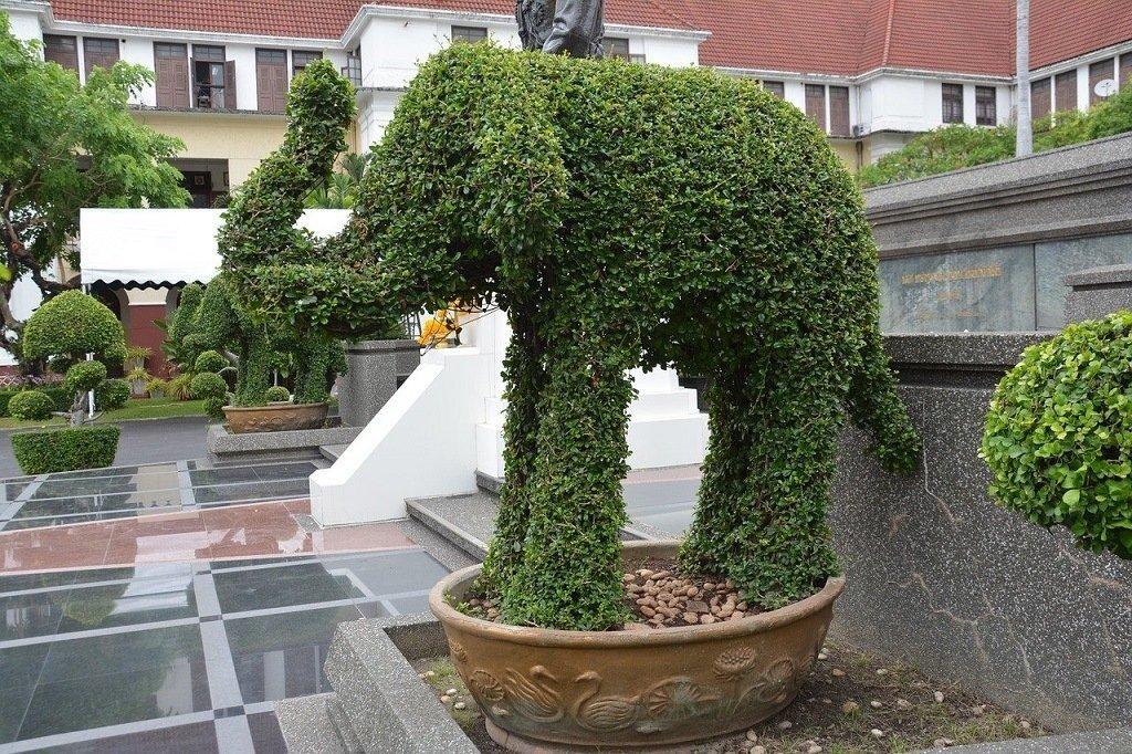 elephant shaped topiary
