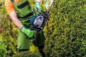 shaping the sides of bushes with a hedge trimmer