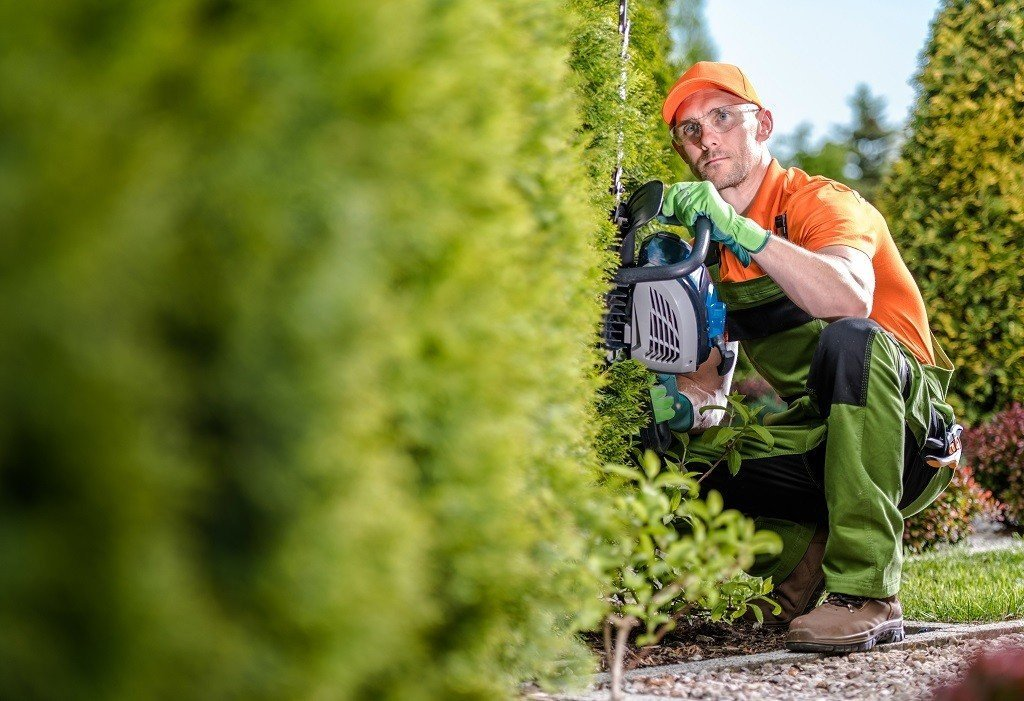 Man trimming the bottom of the hedge first