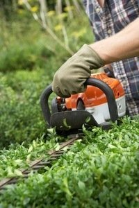 cutting the top of hedges
