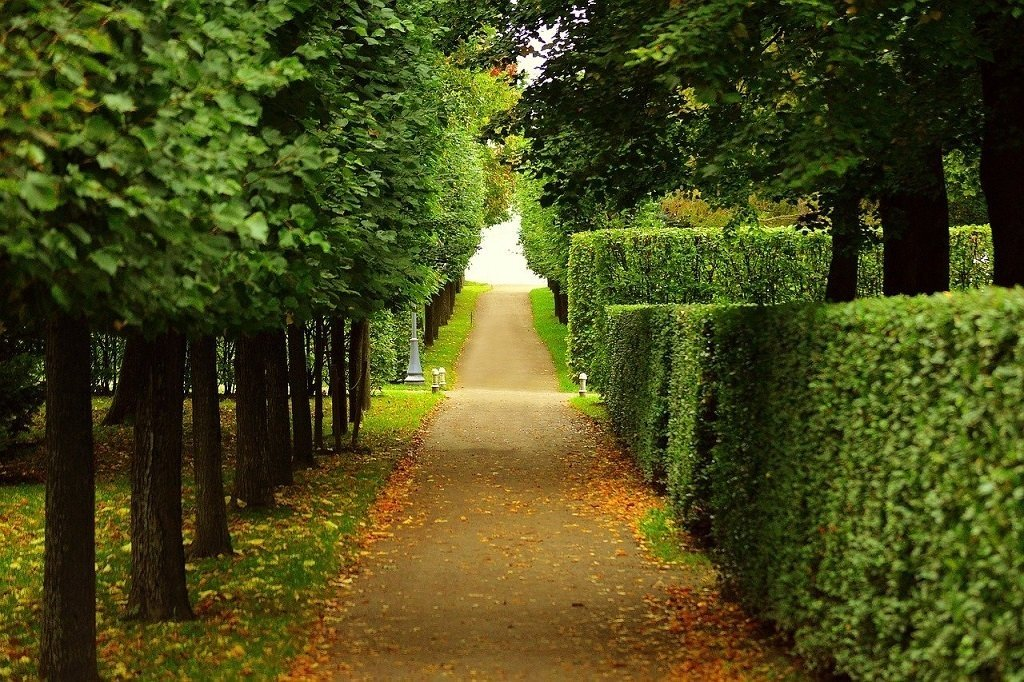 walkway with neatly trimmed trees and bushes