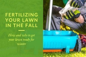 Fertilizing Your Lawn in the Fall - How and why to get your lawn ready for winter