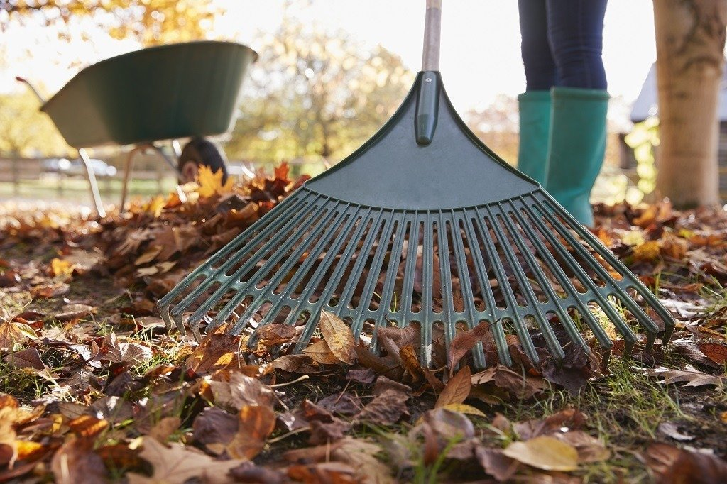 woman raking the leaves out of the grass