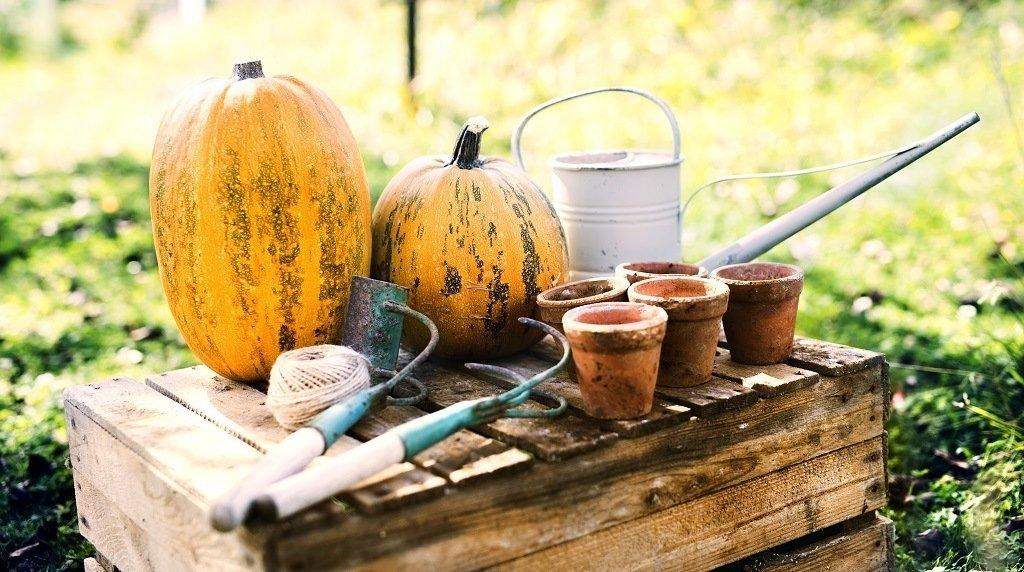 pumpkins and garden tools on the potting bench