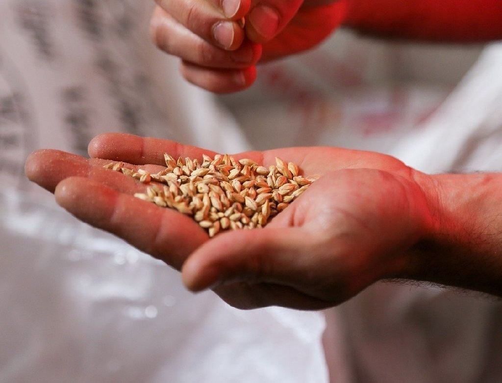 hand holding a bunch of seeds from the harvest