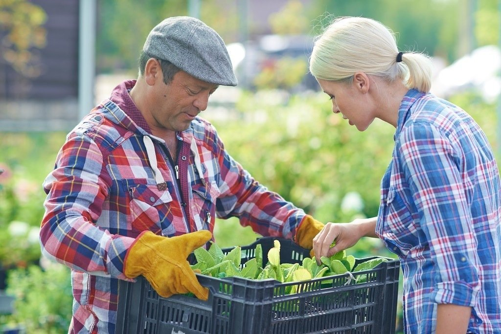 the best way to get free vegetable seeds is from your neighbors and your local community