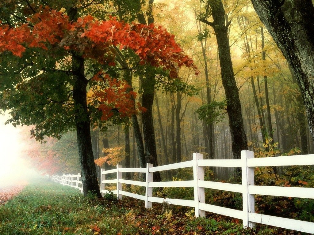 white picket fence in a field