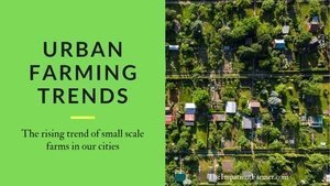 Urban Farming Trends - The rising trend of small scale farms in our cities