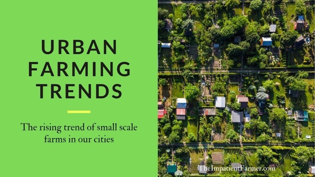 Urban farming trends. The rising trend of small scale farms in our cities