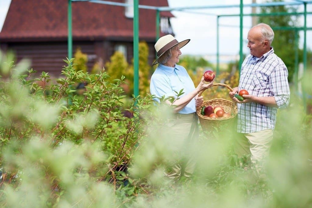 couple harvesting fruits from their backyard
