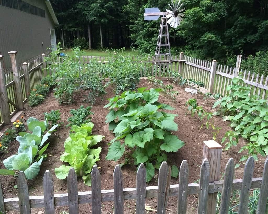 Large vegetable garden with cabbage squash beans tomatoes and brocolli