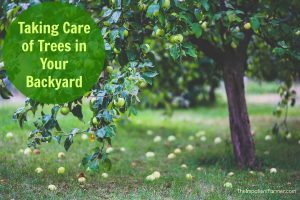 taking care of trees in your backyard