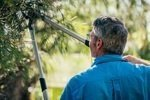 What is the Difference Between Pruning & Trimming Trees and Hedges?