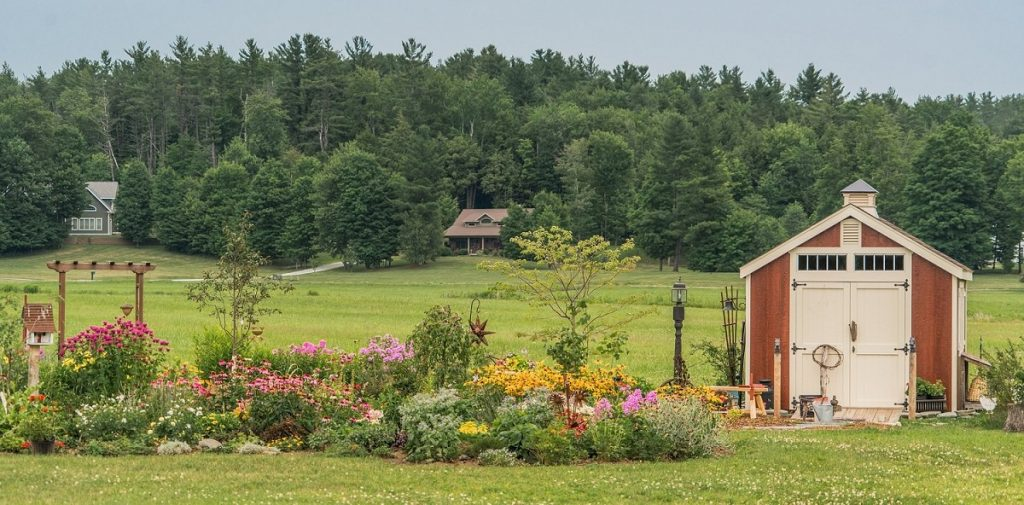 trees in garden design - background of full grown trees with garden in front next to barn shed