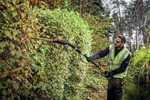 DEWALT 20V MAX Hedge Trimmer cutting through branches of hedge
