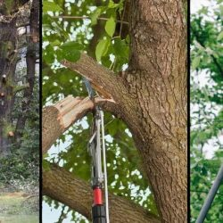 Best Electric Pole Saw Reviews and Buyer's Guide