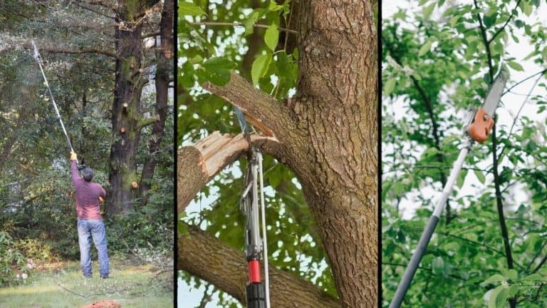 3 views of man using pole saw to trim tree branches