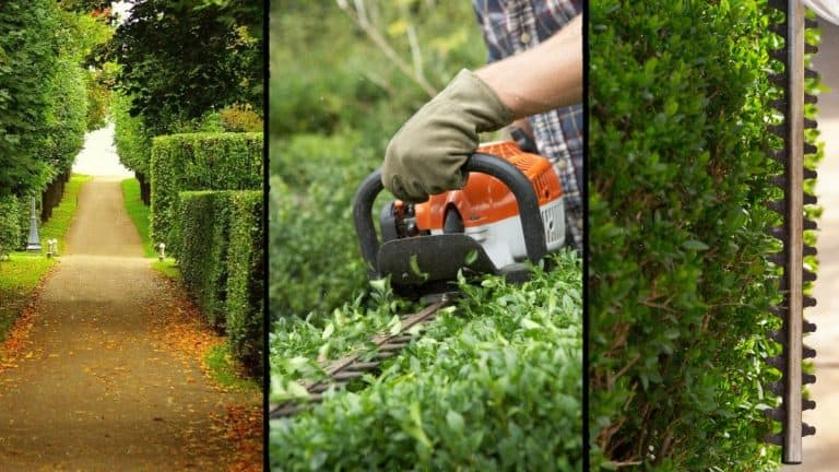 Three photos of trimmed hedges and hedge trimmers