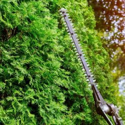 What's The Best Pole Hedge Trimmer for 2021?