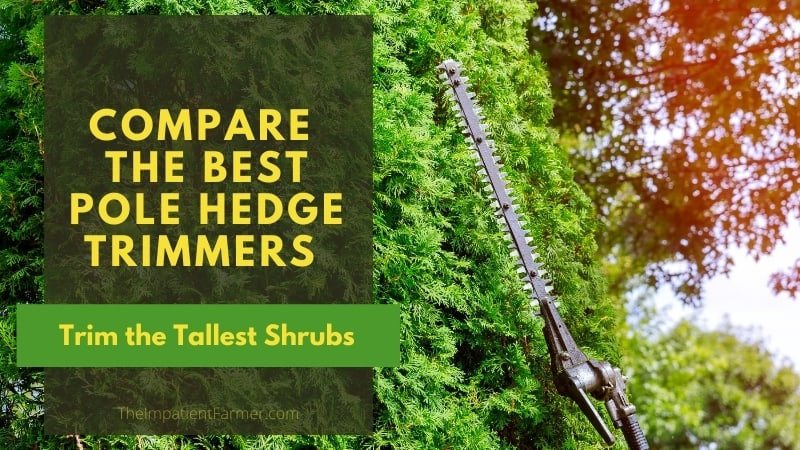 Pole hedge trimmer cutting tall hedges background with title overlay