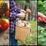The Most Profitable Cash Crops for a Small Farm