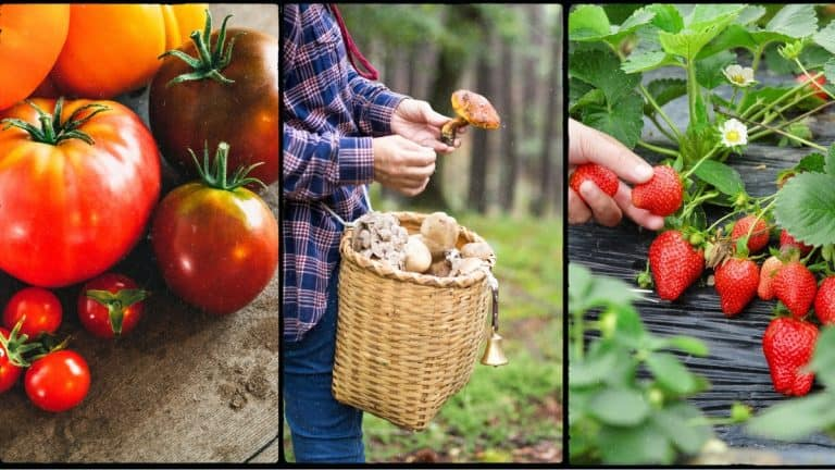 3 cash crops to grow - Heirloom tomatoes, specialty mushrooms and strawberries