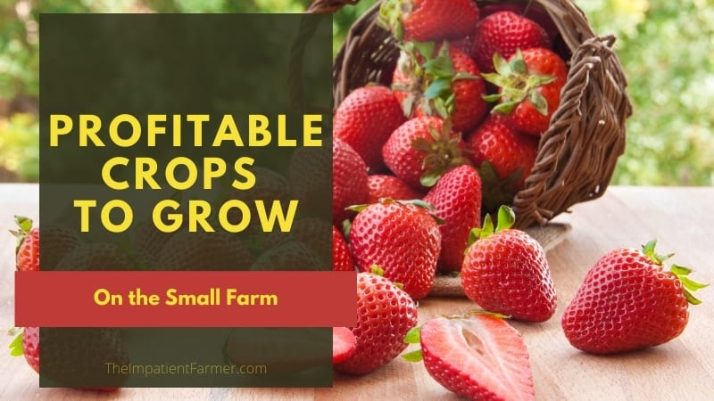Freshly Picked Strawberries on table with title text overlay