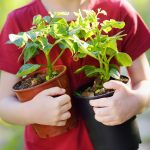 Get Digging! How To Create A Family Garden With Easy Growing Vegetables For Kids
